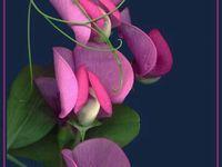 красивое фото: лучшие изображения (27) | Nature, Beautiful ...