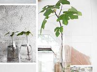 Planting Workspace