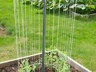 backyard & garden