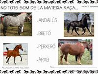 els cavalls