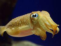 Cephalopod Inspiration