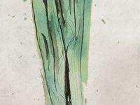 Natural forms, GCSE Art Project 1
