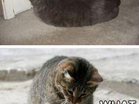Cats ^_^  Board