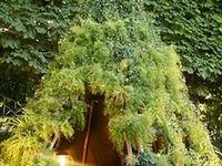 Garden Designs & Architecture