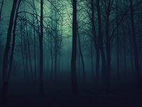 30 Misty Forests Ideas Misty Forest Misty Forest