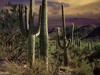 my Arizona