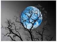~ Moonlight Sonata ~