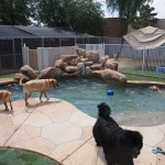 Kennel/play area