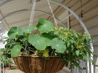 hanging veg/fruit baskets