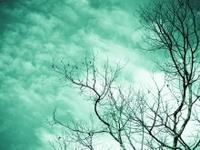 Teal turquoise aqua