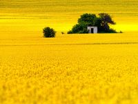 The World is Yellow