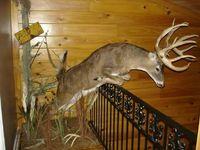55 Best Swamp Donkeys Images Big Game Hunting Deer