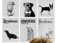 Petting Zoo: Dogs