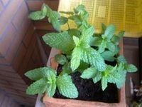 plantas!