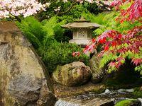 Garden - Japanese