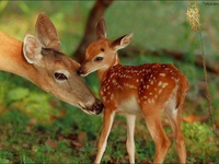 wildlife love