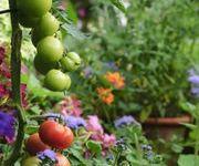 Welcome!! Scroll Through My Edible Garden.