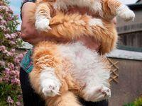 Meow! / cats