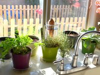 Regrow Vegetables   (from leftovers)   Don't start from scratch or seeds when you can regrow!
