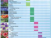 ❀ Summer Garden Ideas & Tips