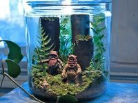 17 best Winter Gardening: Terrariums! images on Pinterest | Miniature gardens, Indoor house plants and Terrarium ideas