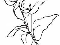 Alcatraz Para Colorear Imagui Dibujos De Flores Dibujos