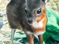Animal - Cute Baby