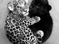 Furry Babies
