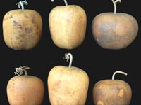 1000 Images About Types Of Gourds On Pinterest Alabama