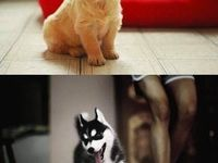 *puppies*