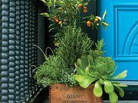 green growing things