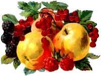 46 Best Images About Vintage Fruit Amp Vegetables On