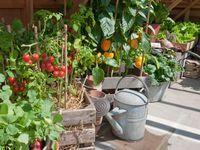 garden groove