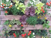 8 best images about Pallet garden on Pinterest Pallets