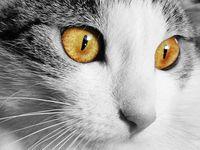 Kittens, Kitty cats and Litter box