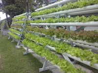 Demplot Karang Tumaritis / Pertanian, Peternakan, Perikanan