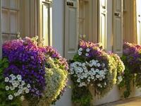 Balconadas con flores