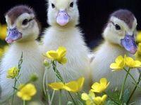 Springtime! Oh, Thank goodness..