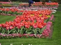 Beautiful Gardens/Flowers