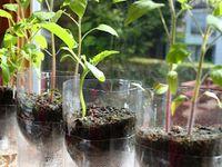 Gardening - For Food