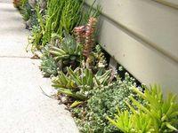 Jardin, taraza, balcon