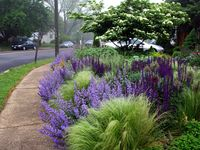 Garden Designers: Roy Diblik