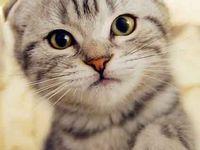 gatos saudaveis