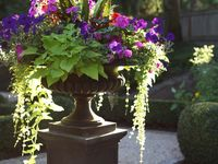 70 Best Flowers Plants And Shrubs In Containers Images Potted Plants Planting Planting