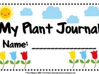 Plants & Indoor Container Gardening