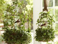 Birdcages/Nests
