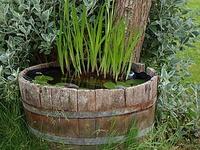 Plus de 1000 id es propos de petit bassin tonneau sur - Petit bassin d eau dijon ...