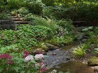 Garden - Water Gardens