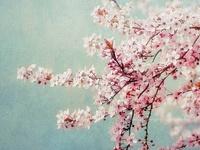 enjoy the beauty