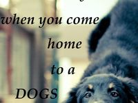 Dogs II